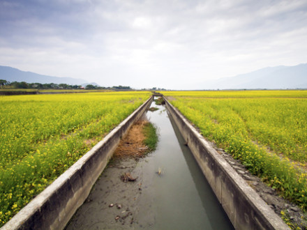 water of irrigation in canal